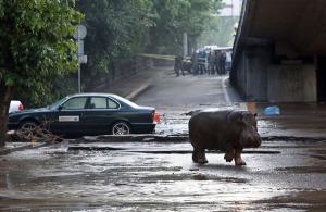 Hippo image-1